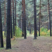 В осеннем лесу :: Александр Подгорный
