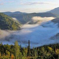 Солнце разбудило туман :: Сергей Чиняев