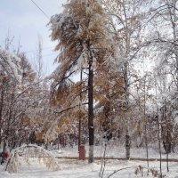 Первый снег :: Василий