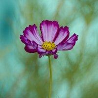 Случайный цветок :: Марина