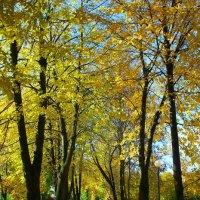 золотая осень :: Николай Буклинский