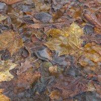 Осень :: Игорь Смолин