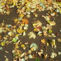 Осенняя лужа :: BoxerMak Mak