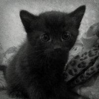 Котёнок :: Михаил Цегалко