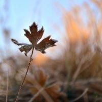 Осенний лист. :: Николай Емелин