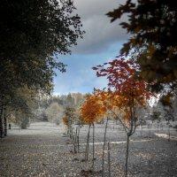 Осень. Цвет уходит :: Игорь Хохлов