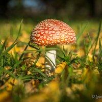 Осенний плод :: Игорь Хохлов