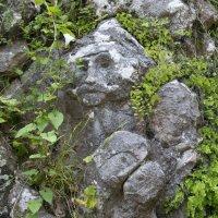 Лица в камне :: Юлия Васильева
