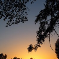 Закат в парке :: Alex Molodetsky