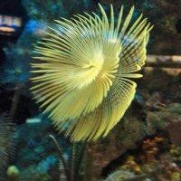 медуза :: kuta75 оля оля