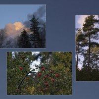 Осенняя природа :: Aнна Зарубина