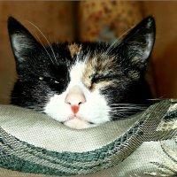 Портрет моей спящей кошки... :: Кай-8 (Ярослав) Забелин