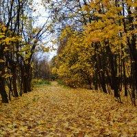 Осень, она не спросит... :: Александр Филатов