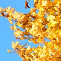 Осень... в окошко :: Юрий