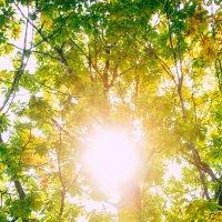 Осень входит в лес... :: Виталий Левшов