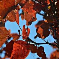 Краски осени :: Елизавета Царук