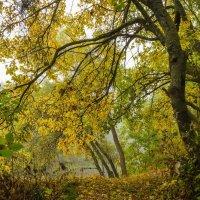 Желтая осень :: Сергей Корнев