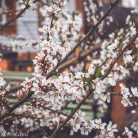 весна :: Катерина