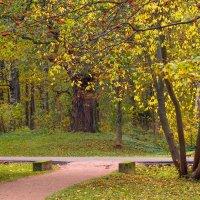 В осеннем парке 3 :: Виталий