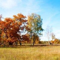 осенний пейзаж :: Андрей Дружинин