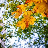 Осень...... :: Дмитрий Колесников