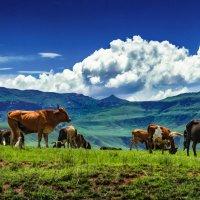 Африканские луга :: Мария Сидорова