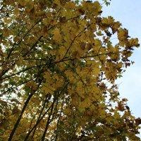 Осенний листопад :: Татьяна