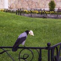 Ворона с лавашом :: Aнна Зарубина