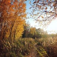 Золотая Осень :: Анастасия Фёдорова
