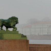 И лев хранит... :: Владимир Гилясев