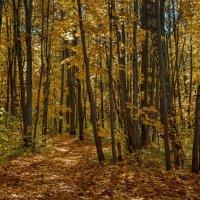 Осенний лес :: Алексей Вольтов