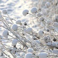 Цветы зимы :: Екатерина Торганская