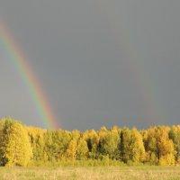 Осннняя радуга :: Ольга Тумбаева