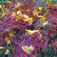 Осень :: Вера Щукина
