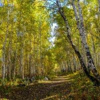 Золотая осень. :: Rafael