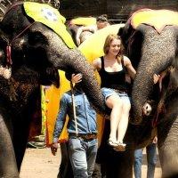 слоны :: Таня