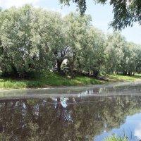 Набережная реки Перерытицы :: Елена Павлова (Смолова)