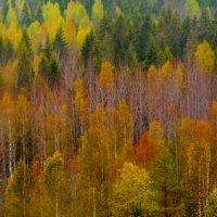 Карелия.Рускеала.Осень. :: Анастасия Смирнова