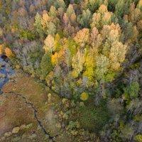 Осенняя :: Дмитрий Погодин