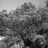 Узоры южного солнца. :: Андрий Майковский