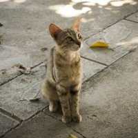 Meow :: Milena WeirdDark