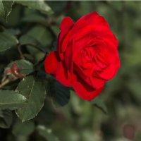 Цветы запоздалые... :: Nonna