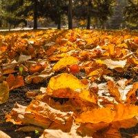 Осенние желтые листья на солнце :: Сергей Тагиров
