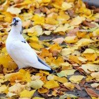 Голубь в осеннем парке. :: Марина Романова
