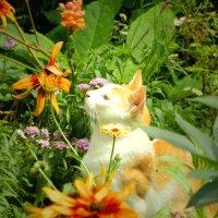 Хороши цветочки)) :: ольга хадыкина
