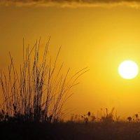 Белое солнце рассвета.... :: владимир