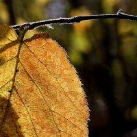 Осенние листья... :: Валерия  Полещикова