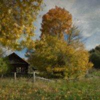 Осенняя зарисовка :: Ирина Елагина