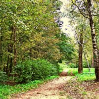 Осенний парк. :: Лара ***