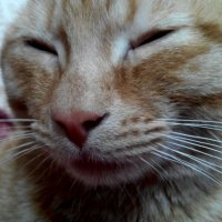 Просто  доволный кот Рыжик :: Татьяна Королева